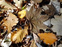 Fallen autumn leaves Royalty Free Stock Photos
