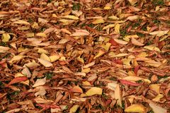 Autumn leaves on ground. Good background for autumn-themed invitations, stationary, etc Stock Photo