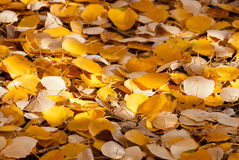 Autumn. Leaves on the ground, autumn Royalty Free Stock Photography
