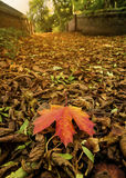 Autumn Leaves. Autumn leaves on the ground Stock Images