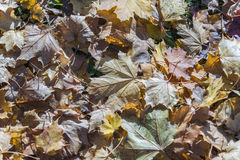 Autumn leaves on the ground.  Stock Photography