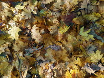 Autumn leaves on ground. Autumn leaves on the ground Stock Image