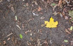 Autumn leaves on the ground. In a park Royalty Free Stock Images