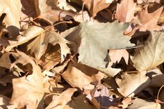 Autumn leaves on the ground. In the park in nature Stock Images