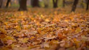 Autumn leaves on the ground. Beautiful forest on the blurred background. Focus and defocus of autumn leaves on the ground. Beautiful forest on the blurred stock footage