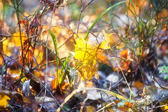 Autumn leaves on the ground close up. In soft light Stock Photos