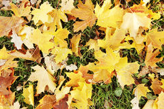 Autumn leaves on ground Stock Photography