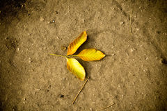 Autumn Leaves on the Ground Stock Photos