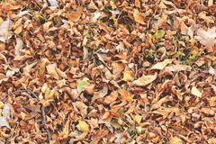 Autumn Leaves on the ground. Autumn leaves cover the ground Stock Photos