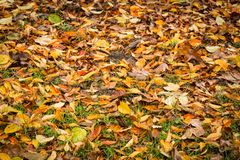 Autumn leaves on ground covering the grass stock images