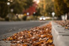 Autumn Leaves on Ground By Curb With Car Driving In Background. Selective Focus With Copy Space Royalty Free Stock Image