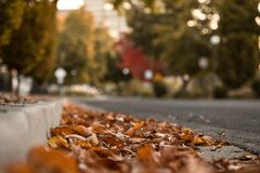 Autumn Leaves on Ground By Curb In City Street. Selective Focus. Autumn Leaves on Ground By Curb In City Street. Selective Focus Bokeh Background With Copy Stock Photos
