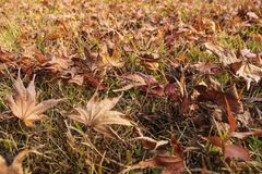 Autumn leaves on ground. Fall colors. Background royalty free stock photography