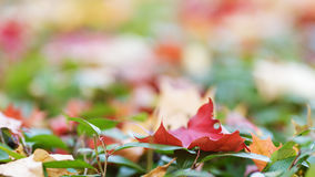 Autumn leaves on the ground Royalty Free Stock Photo