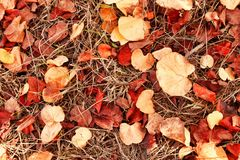 Autumn leaves on the ground. fall wallpaper. toned image. Autumn leaves on the ground. fall wallpaper. toned image royalty free stock images