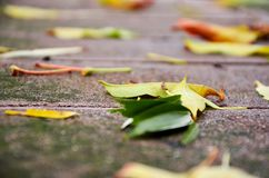 Autumn leaves on the ground stock photos