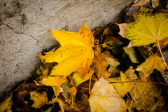 Autumn leaves on the ground. Stock Image