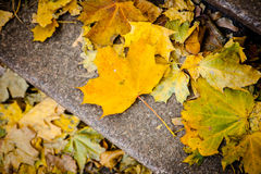 Autumn leaves on the ground. Stock Images