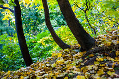 Autumn leaves on the ground. Royalty Free Stock Images