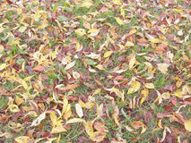 Autumn Leaves on the Ground Stock Photo