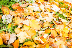 Autumn leaves. Autumn. On the ground many leaves of different colors. Golden leaves on the ground. The photo was taken in the woods behind the city of Sochi Stock Image