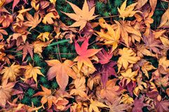Autumn leaves on ground of a moss garden royalty free stock photos