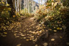 Autumn leaves on the ground of a mountains trail. stock photos