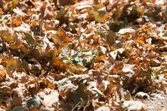 Autumn leaves on the ground. In the park in nature Stock Photos