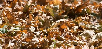 Autumn leaves on the ground. In the park in nature Royalty Free Stock Photos
