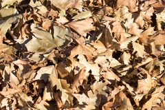 Autumn leaves on the ground. In the park in nature Stock Image
