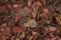Autumn leaves on the ground. In the park - texture background Stock Image