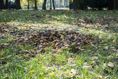 Autumn leaves on the ground in the park. Vibrant colors stock images