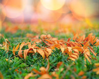 Autumn leaves on the ground Stock Image