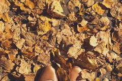 Autumn leaves on ground. Top view Stock Photos