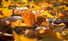 Autumn leaves on the ground Stock Photography