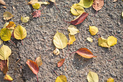 Autumn leaves on the ground. Autumn yellow and orange leaves on the ground Royalty Free Stock Images
