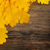 Autumn leaves on grunge background Royalty Free Stock Photos