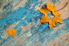 Autumn leaves on the grunge wooden cyan desk Stock Image