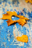 Autumn leaves on the grunge wooden cyan desk Stock Photos