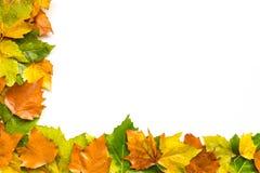 Autumn Leaves Half Border Background stock afbeelding