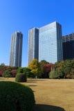 Autumn leaves in Hamarikyu Gardens, Tokyo Royalty Free Stock Photography