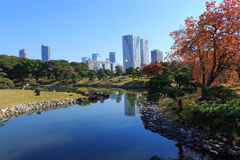 Autumn leaves in Hamarikyu Gardens, Tokyo Stock Image