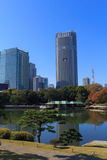 Autumn leaves in Hamarikyu Gardens, Tokyo Royalty Free Stock Photography