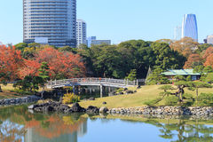 Autumn leaves in Hamarikyu Gardens, Tokyo Royalty Free Stock Image