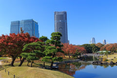 Autumn leaves in Hamarikyu Gardens, Tokyo Royalty Free Stock Photo