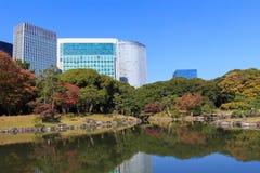 Autumn leaves in Hamarikyu Gardens, Tokyo Stock Images