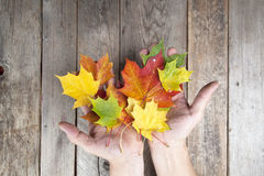 Autumn leaves on a hand Royalty Free Stock Image
