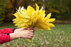 Autumn leaves in hands Stock Photo