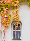Autumn Leaves Hang over Window Stock Image
