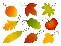 Autumn Leaves Hang Tags Stock Images